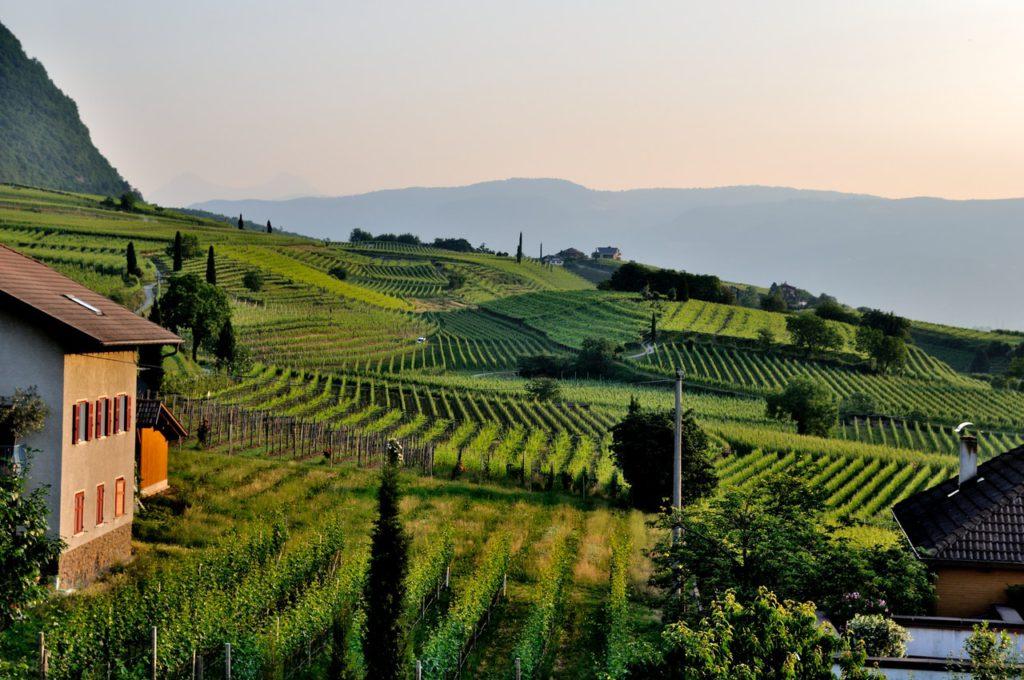 green landscape vineyard